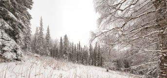 Salita di inverno al iremel della montagna Repubblica di Bashkortostan immagine stock