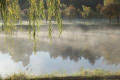 Salix Стоковые Фото