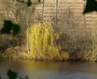 View over a river in vineyards with autumnal weeping willow on the bank. Salix babylonica, Wine growing in the steep slope in southern Germany, southern German stock images
