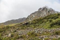Salkantay Trekking Peru. The road to Machu Pichu Stock Image
