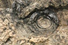 salkhan sedimentary strukturtrace för rock royaltyfri bild