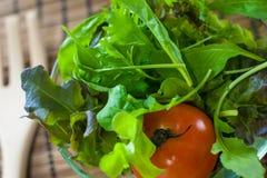 Sallad för ny grönsak med den gröna eken och tomaten som den är förberedda, innan att laga mat royaltyfria foton