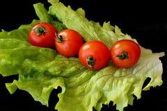 Sallad och tomater på svart bakgrund Royaltyfri Bild