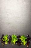 Salladblandning, olika grönsallatsidor på texturerad bakgrund, rum f royaltyfri foto