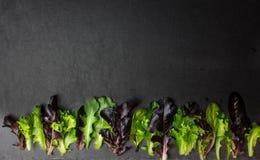 Salladblandning, olika grönsallatsidor på texturerad bakgrund, rum f royaltyfri fotografi