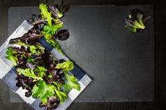 Salladblandning, olika grönsallatsidor på torkduken och texturerad backgrou royaltyfri foto