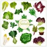 Salladgräsplaner, vektoraffisch för lövrika grönsaker vektor illustrationer