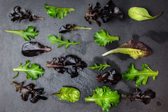 Salladgrönsallatmodell på mörker texturerad bakgrund arkivfoton