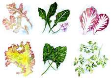 Salladgräsplaner Arkivfoton