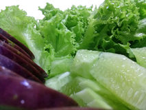 Salladnärbild för ny grönsak Arkivbild