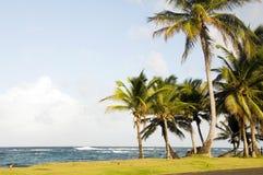 Sallie Peachie plażowa drzewek palmowych Kukurudzy Wyspa Fotografia Stock