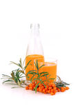 Sallow thorn juice Stock Images