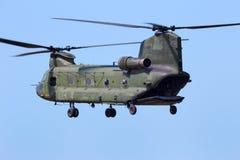 Salmão real CH-47 Fotos de Stock
