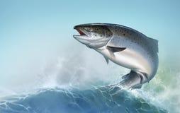 Salmões atlânticos ou salmões cor-de-rosa no fundo Salm?es vermelhos Pesca nos peixes do norte do rio Salmões de Atlântico o fund ilustração royalty free