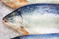 Salmões noruegueses frescos no gelo no supermercado fotos de stock
