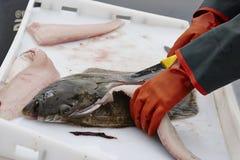 Salmões que estão sendo cortados acima na doca pelo pescador Imagem de Stock