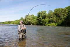 Salmões travados do pescador trações alegres Imagem de Stock Royalty Free