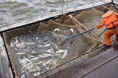 Salmon промысловый сезон стоковые фото