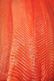 Salmon текстура Стоковая Фотография RF