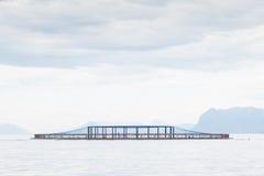 Salmon ферма Стоковое фото RF