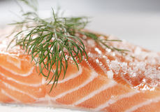 Salmon Royalty Free Stock Photo