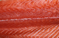 Salmon Royalty Free Stock Photos