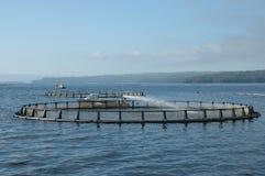 Salmon. Stock Photo