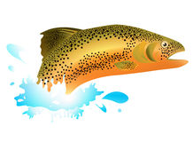 Salmon. In Blue Water Splash Over White Background Stock Photography