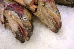 Salmon. Two fresh salmon fishes on cold ice Stock Photos