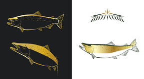 Salmon. Three stylized sketches of a salmon made with gold and dark green colors on white and black background. Contour of a fish and a fill can be easily Royalty Free Stock Photos