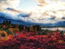 Salmon Arm im Herbst lizenzfreies stockfoto