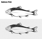 Salmon art highly detailed in line art style.Fish vector by hand drawing. stock illustration