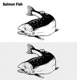 Salmon art highly detailed in line art style.Fish vector by hand drawing. vector illustration
