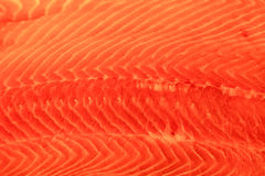 Salmon background. Salmon red fish texture closeup background Royalty Free Stock Photo
