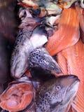 Salmon Body Parts Fotos de archivo libres de regalías