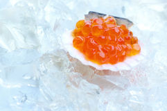 Salmon caviar in shell Royalty Free Stock Images
