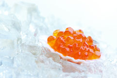 Salmon caviar in shell Stock Images