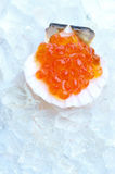 Salmon caviar in shell Stock Photography