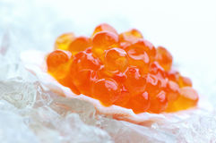 Salmon caviar in shell Stock Photos