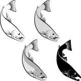 Salmon. Clip art illustration and line art Stock Image