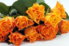 Salmon-colored Roses released stock photo