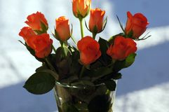 Salmon colored roses in the vase stock image