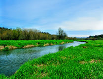 Salmon Creek Marshland. View of Salmon Creek running through grass marsh Stock Photography