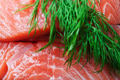 Salmon and dill background Stock Images