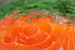 Salmon and dill. Stock Image