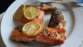Salmon Dish , ready to eat Stock Photography