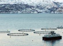 Salmon Farm Fotografia de Stock Royalty Free