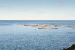Salmon farm on the Faroe Islands Stock Photos