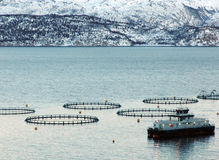 Salmon farm Royalty Free Stock Photography