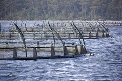 Salmon Farming. Floating nets of a salmon farm in a natural bay Stock Photos